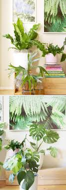 beautiful house plants 18 most beautiful indoor plants 5 easy care tips a piece of