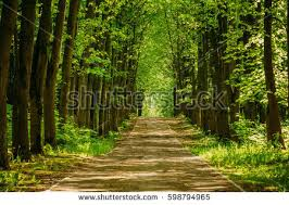 walkway path green trees forest stock photo 598794965