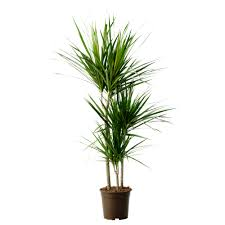 Plants For Bedroom Top 6 Plants For Bedrooms To Help You Sleep Better 10 View Details