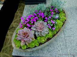 succulent container garden home design ideas and pictures