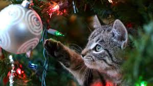 12 ways to pet proof your tree