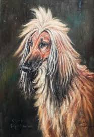 afghan hound racing uk click to see full size oil on canvas of a afghan hound by thomas
