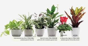 Best Plants For Bathrooms Bathroom Plants Low Light Awesome This Is Why Peace Lily Is Best