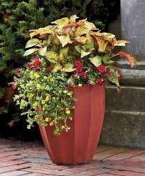 Ideas For Container Gardens Container Gardening Ideas Decorating Clear