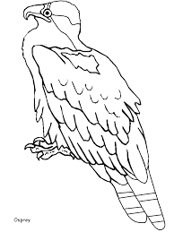 bird coloring book pages kids coloring