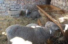 catholic pilgrimages europe sheep farm europe european travel catholic pilgrimage tours