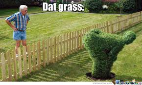 Grass Memes - dat grass by memerandomness meme center