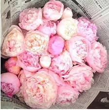 where to buy peonies 1185 best flowers plants and gardening ideas images on