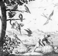 lesser antillean macaw wikipedia