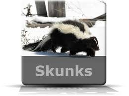 How Do You Get Rid Of Skunks In Your Backyard Best 25 Skunk Removal Ideas On Pinterest Skunk Smell Remover