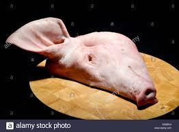 butchered pigs head on a beechwood butchers block chopping board stock photo butchered pigs head on a beechwood butchers block chopping board