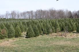 molyneaux plantation and tree farm home