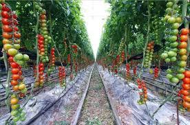 Raised Vegetable Garden Ideas Vegetable Garden Sizes Size Of Backyard Vegetable Garden