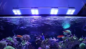 t5 lighting fixtures for aquariums the deep dive into reef aquarium lighting tidal gardens