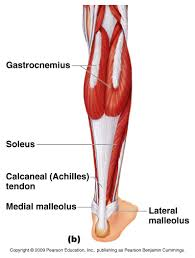 Sole Of The Foot Anatomy Muscle Anatomy