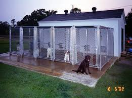 a guide to sourcing the right boarding kennels groovy cats n dogs