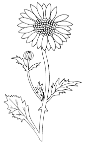 daisy coloring page 12 best coloring page images on pinterest drawings clip art and