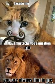 Mustache Cat Meme - why do cats with a fake mustache look so funny quora