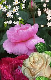 imagenes de amor con rosas animadas fada sonhos e amor rosas e flores diversas community google