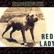 american pitbull terrier types american pit bull terrier history pitbull stories