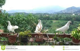 tauben auf dem balkon drei weiße tauben auf einem balkon lizenzfreie stockfotografie