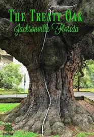 132 best trees u0026 shrubs images on pinterest shrubs garden ideas