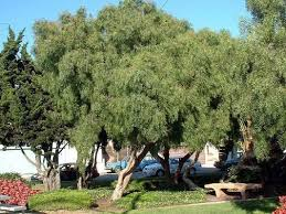82 best trees images on gardens garden ideas and
