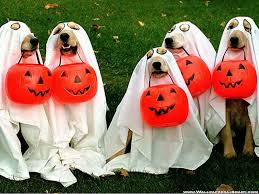 funny halloween quotes images pictures for facebook
