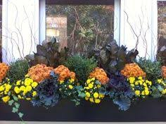Plants For Winter Window Boxes - 15 best fall window box ideas images on pinterest flowers
