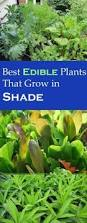 10 Vegetables U0026 Herbs You by 10 Ways To Grow A Shade Garden Gardening Garden Site Gardens
