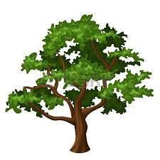 oak tree pictures clip art 61