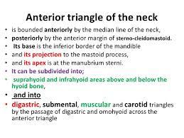 Scalene Triangle Meme - 8 triangles of the neck