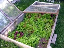 edible landscaping planting vegetables for a spring harvest
