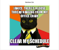 Business Cat Memes - bravo plans i can has cheezburger reality series brilliant or bad