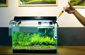 Plants For Aquascaping Different Fertilizing Methods Used In Aquascaping