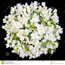 Jasmine Flowers Circle From White Jasmine Flowers Stock Photo Image 56633474