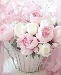 Flower Bomb Definition - mauve roses fleurs pinterest girly and flowers