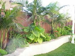 awesome landscape tropical tropical landscaping ideas for backyard