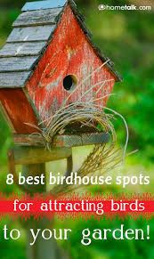 Birds In Your Backyard 37 Best For The Birds Images On Pinterest For The Birds