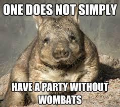 Wombat Memes - phish net crepuscular