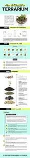 how to build a terrarium u2014 fun kid friendly diy garden project