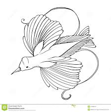 bird of paradise coloring page stock illustration image 41690576