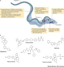 anti trypanosomatid drug discovery an ongoing challenge and a