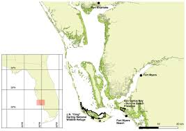Map Of Port Charlotte Florida by Movements And Use Of Space By Mangrove Cuckoos Coccyzus Minor In