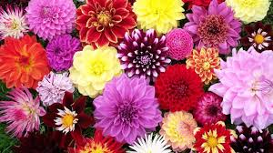 100 top 10 flowers top 10 flowers to repel bugs and other