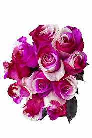 purple roses for sale wholesale tinted cotton candy novelty roses for sale online