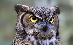 symbolizes meaning owl symbolism learn tattoo meanings and why they u0027re unique guy
