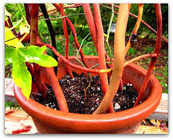 houseplant trellis how to make a trellis for your potted plants tall clover farm