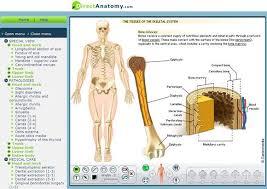 Surface Anatomy Eye Best 25 Interactive Anatomy Ideas On Pinterest Human Body