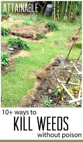 vegetable garden weed control